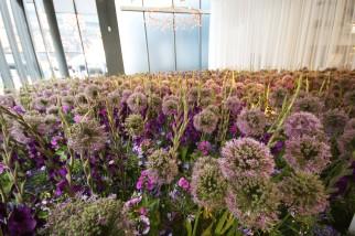 Purple Patch by Egret West