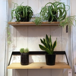 adventure-in-furniture-plant-shelves