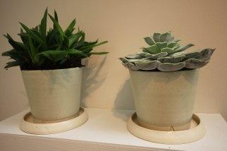 arran-st-east-succulents