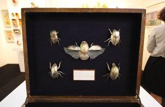 dean-patman-boxed-beetles