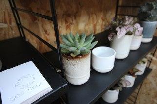 geo_fleur-succulents