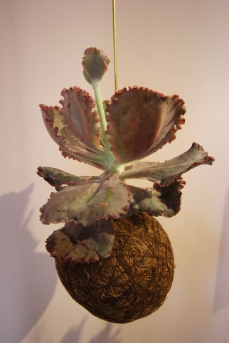 kaja-skytte-sculptural-plants
