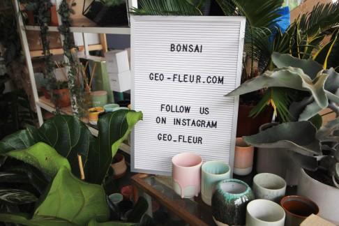 bonsai-signage