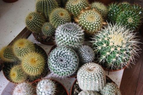 cactus-tray