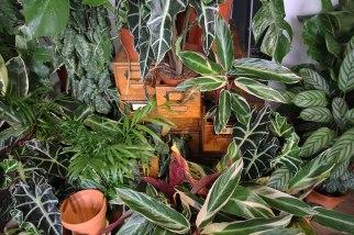 draws-full-of-plants