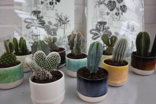 geo-fleur-plants