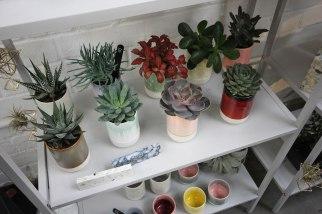 geo-fleur-slurp-cup-plants