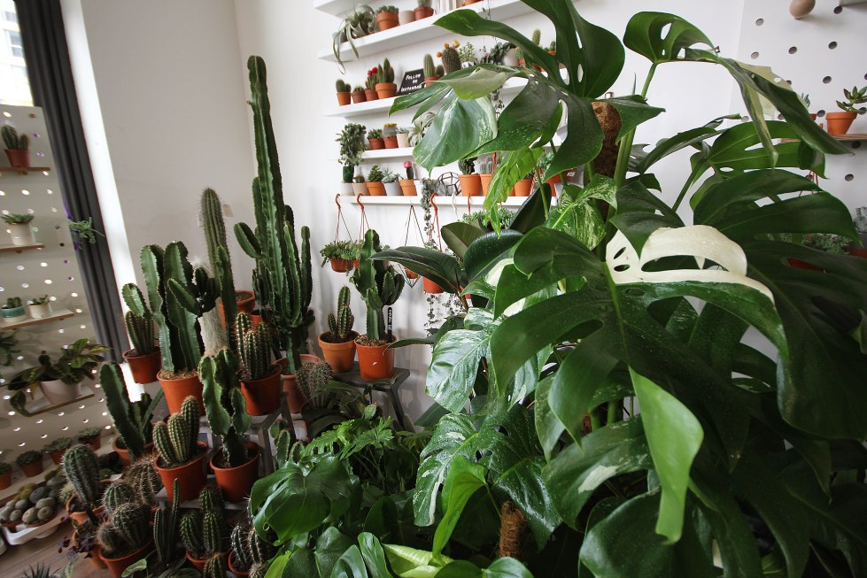 large-monstera-and-cacti