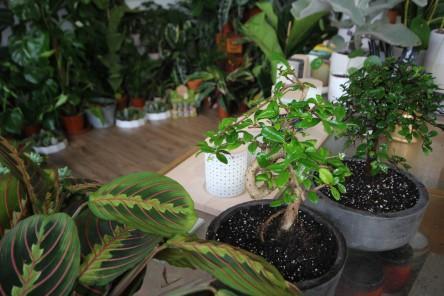 new-bonsai-pots