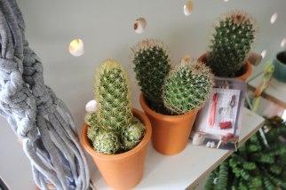 small-cacti