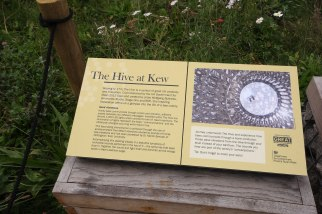 the-hive-information