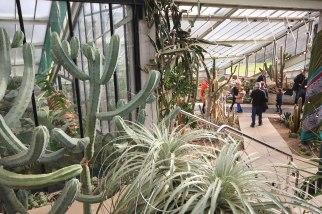 arid-cacti