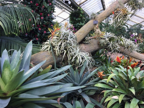 greenhouse-environment