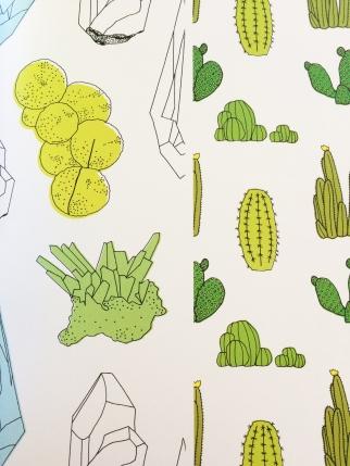 Minerals & Cactus
