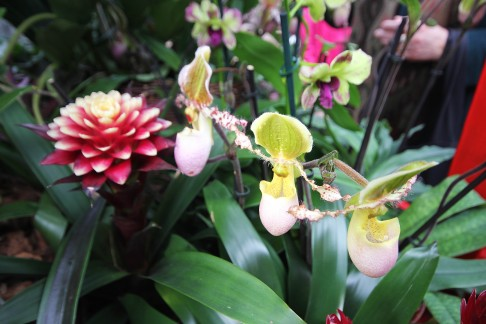 orchid-cart-closeup