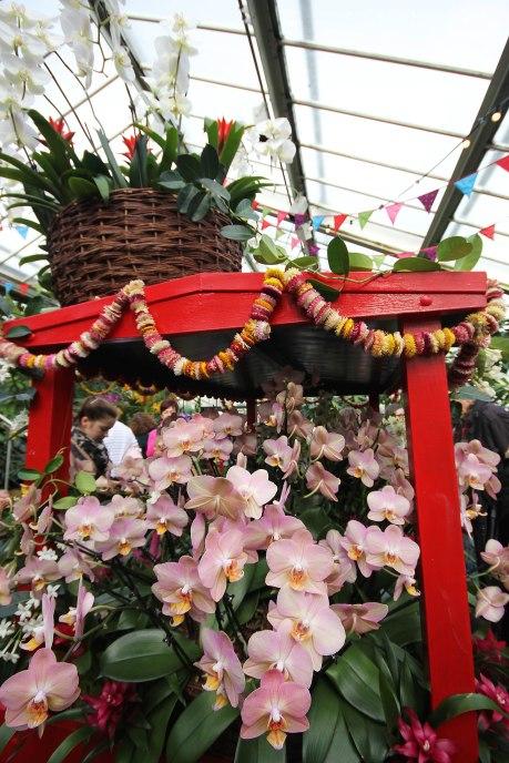 orchid-cart-rear