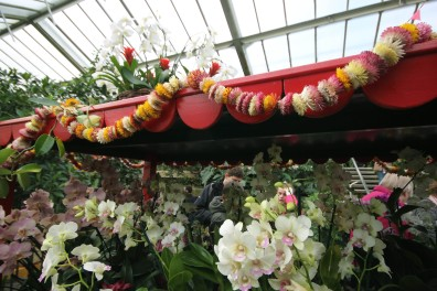 orchid-cart