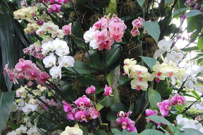 orchid-collumn