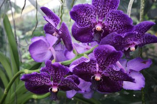 purple-bloom