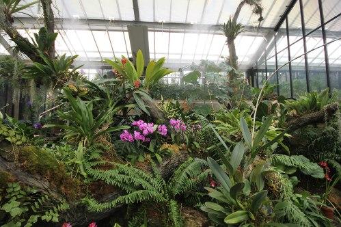 rainforest-room