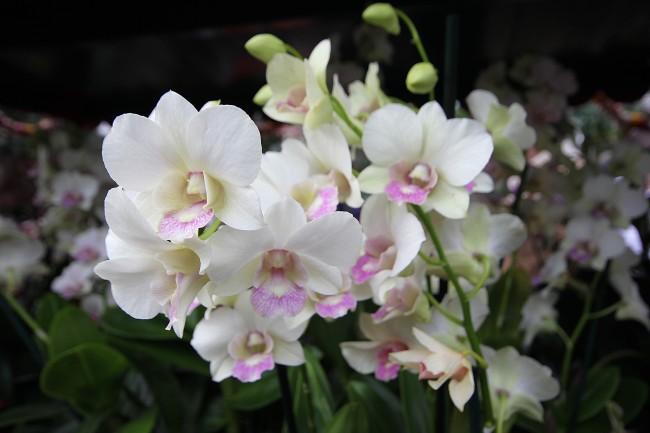 white-bloom