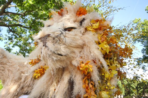 Lion of Chelsea in Bloom