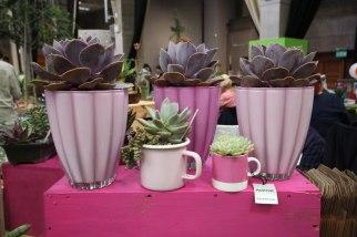 Blue Leaf Pink Collection