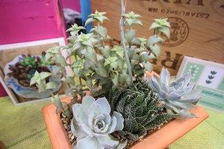 Blue Leaf Planter
