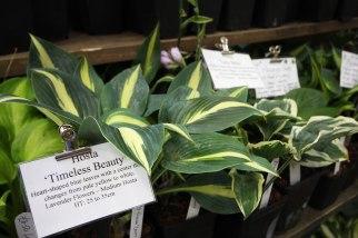 New Forest Hostas & Hemerocallis