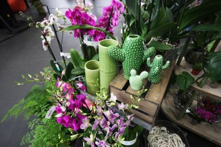 The Palace Gardener Display
