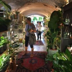 Nunhead - indoor plant specialist